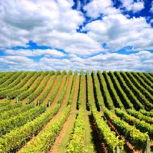 Long Island Bicycle Winery Tours