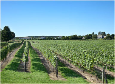 Long Island Vineyard Tours